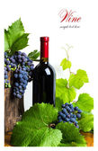 Bottle of red wine with grapes — Stock Photo