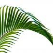 Palm leaves — Stock Photo #31440821