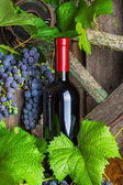 A bottle of red wine on the background of grapes — Stock Photo