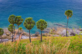 Palm trees on the beach on the island of Phuket — Stock fotografie
