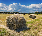 Harvested field with straw bales in summer — Stock Photo