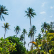 Grove of coconut trees on a sunny day — Stock Photo