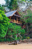 Hut in the jungle by the sea — Stock Photo