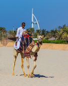 Camel on Jumeirah Beach in Dubai — Stock Photo