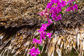арка фиолетовые цветы в таиланде — Стоковое фото