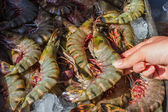 Shrimp and other seafood at a market in Thailand — Stock Photo