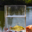 Small fish in a glass jar on the background of lake — Stock Photo #45348147