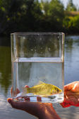 Small fish in a glass jar on the background of lake — Stock Photo