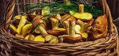 Still life of yellow boletus mushrooms — Stock Photo