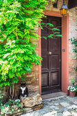 Italian house and cat — Stockfoto