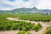 виноградники в долине — Стоковое фото