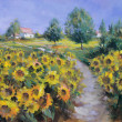 Foto Stock: Painted sunflowers field