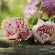 Vintage peonies on wooden plank — Stock Photo