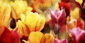 Colorful retro tulips — Stock Photo