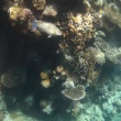 Tropical coral reef and fishes on Red Sea — Stock Video