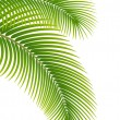 Leaves of palm tree on white background. — Stock Vector #13834402