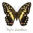 Butterfly Papilio Demodocus. Watercolor imitation. — Stock Vector