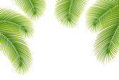 Leaves of palm tree on white background. — Stock Vector