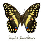 Butterfly Papilio Demodocus. Watercolor imitation. — Stock Vector
