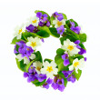 Stock Photo: Wreath of woodland violets and primula.