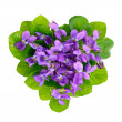 Violets heart. — Stock Photo