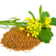 Mustard flowers and seed. — Stock Photo