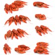 Boiled crawfish set on white background. — Stock Photo #30913545