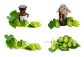 Hop plant and pharmaceutical bottles. — Stock Photo