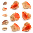 Cockleshells on a white background. — Stockfoto