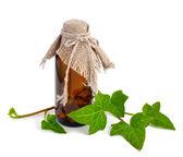 Hedera z butelki farmaceutyczne — Zdjęcie stockowe