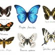 Butterflys. Watercolor imitation. — Stock Photo #46426505