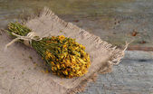 Dried Hypericum on wooden board — Stock Photo