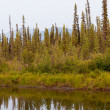 Taiga at McQuesten River near town of Mayo Canada — Stock Photo