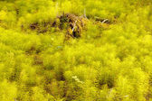 Horsetail forest floor background texture pattern — Stock Photo