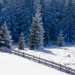 Beautiful frozen fir forest snowy winter landscape — Stockfoto