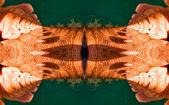 Patrón orgánico del organismo caleidoscópicos piel humana — Foto de Stock