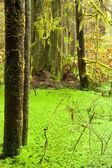 Rainforest wetland wildernis of West Coast BC — Stock Photo