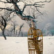 Snowshoes leaning against Birch tree snowscape — Stock Photo