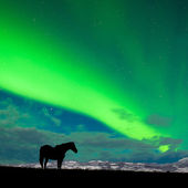 Horse distant snowy peaks with Northern Lights sky — Zdjęcie stockowe