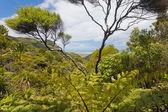 Coastal NZ ferntree forest wilderness near Piha — Stock Photo