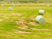 Harvesting cut grass for hay plastic wrapped bales — Stock Photo