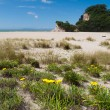 Scenic Coromandel Peninsula NZ coastline seascape — Stock Photo