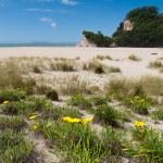 Scenic Coromandel Peninsula NZ coastline seascape — Stock Photo