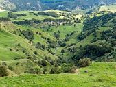 Farmland landscape scene Hawke's Bay New Zealand — Stock Photo