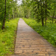 Stock Photo: Boreal forest taigboardwalk Northern BC Canada