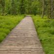 Boreal forest taiga boardwalk Northern BC Canada — Stock Photo #34413691