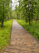 Boreal forest taiga boardwalk Northern BC Canada — Stock Photo