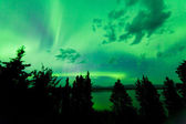 Intense green northern lights over boreal forest — ストック写真
