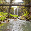Whangarei Falls, Northland on North Island of NZ — Stock Photo