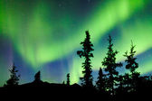 Yukon taiga spruce Northern Lights Aurora borealis — Foto Stock